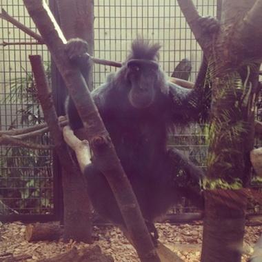 zoo08.jpg