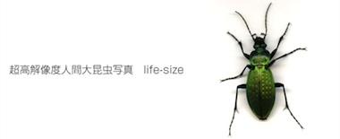 life-size01%3Ashun%3Ablog.jpg